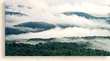 Blue Ridge Mountain Mist