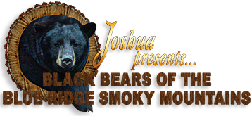Black Bears of the Blue Ridge - Smoky Mountains