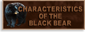 Characteristics of the Black Bear