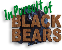 Pursuit of the Black Bears