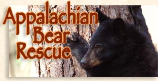Appalachian Bear Rescue
