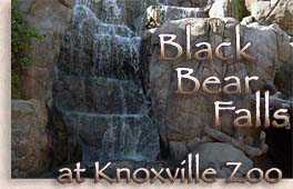 Knoxville Zoo - Great Smoky Mountains