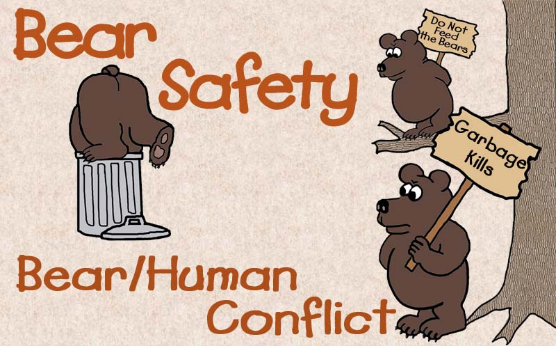 Bear Human Conflict