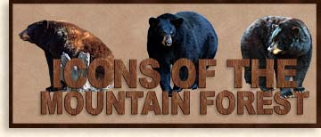Black Bears Icons of the Mountain Forest
