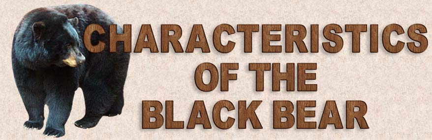 Characteristics of Black Bears