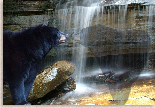 Cherokee Legends of the Black Bear