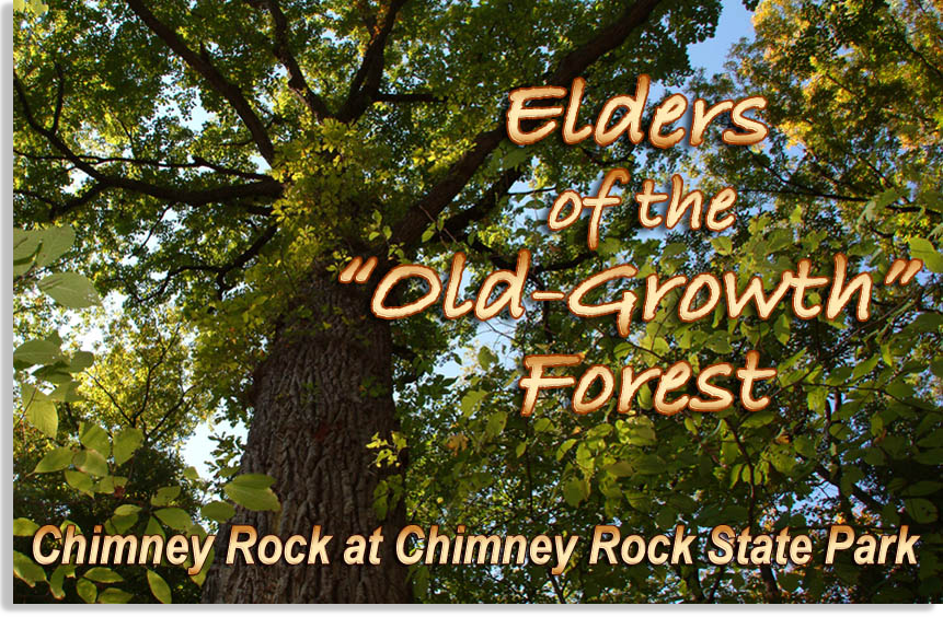 Elders of the Old Growth Forest at Chimney Rock State Park