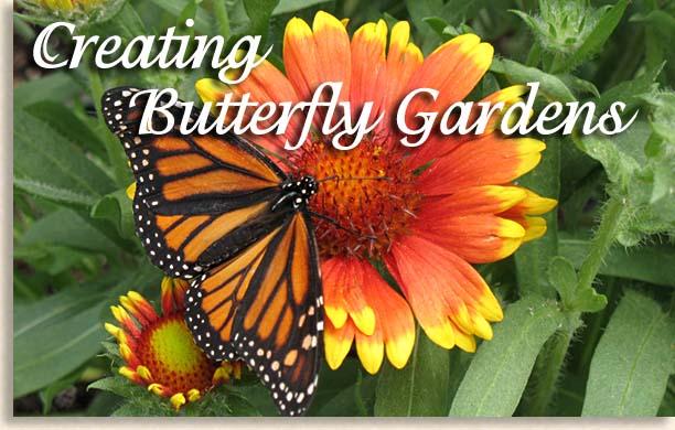 Planning A Butterfly Garden