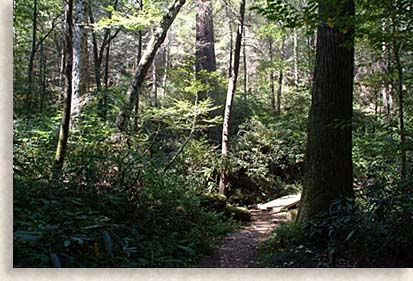 Forest at Joyce Kilmer Memorial Forest