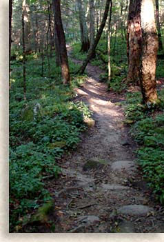 winding trail in Joyce Kilmer Memorial Forest