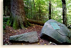 History of Joyce Kilmer Memorial Forest