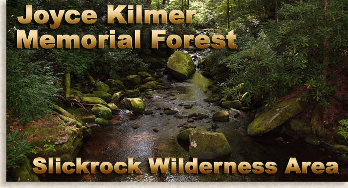 Enter Joyce Kilmer Memorial Forest