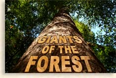 Giants of the Forest