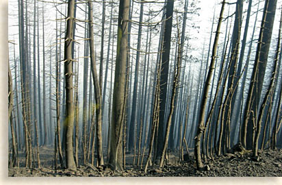 Forest Fires devastate wildlife and their habitats