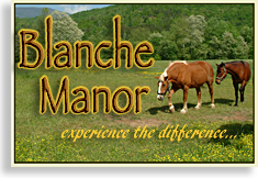 Horseback Riding on the border of Blue Ridge and the Ocoee River