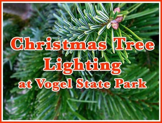 Vogel State Park Tree Lighting