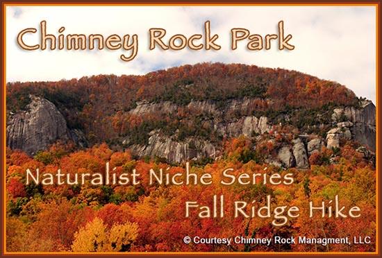 Naturalist Niche -Fall Ridge Hikes