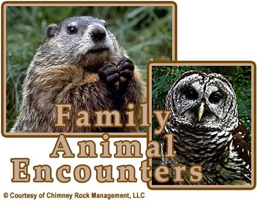 Chimney Rock Memorial Day Family Animal Encounters