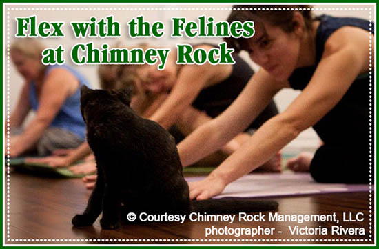 Flex with the Felines at Chimney Rock
