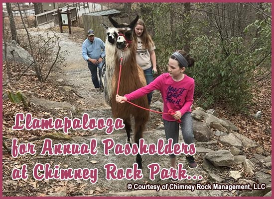 Chimney Rock Llamapalooza