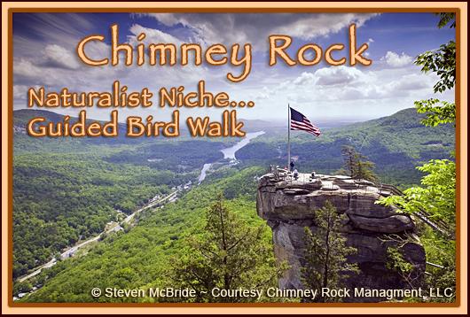 Chimney Rock Naturalist Niche:  Summer Birding