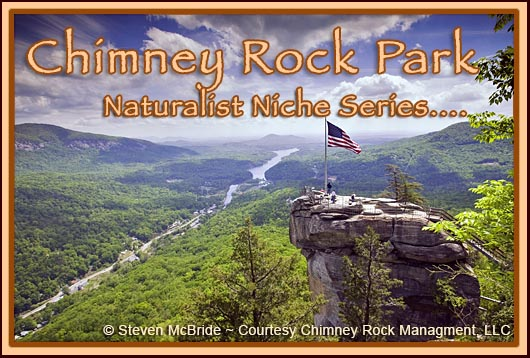 Chimney Rock Park Naturalist Niche
