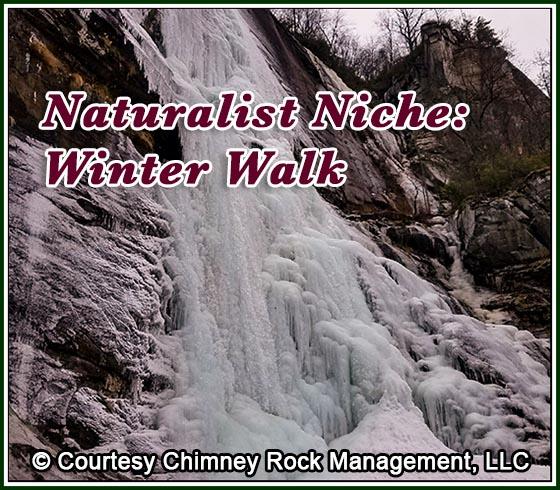Naturalist Niche - Winter Walk