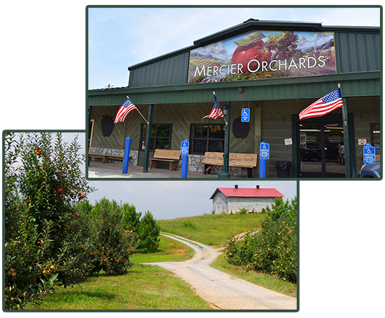 Mercier Orchard