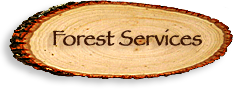 National Forestry Service