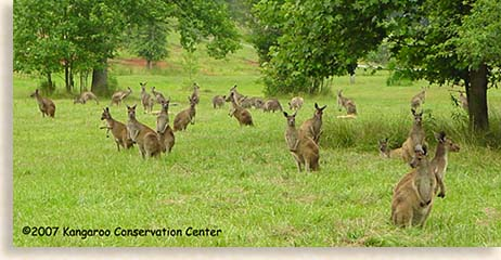 Kangaroo Conservation Center in Dawsonville
