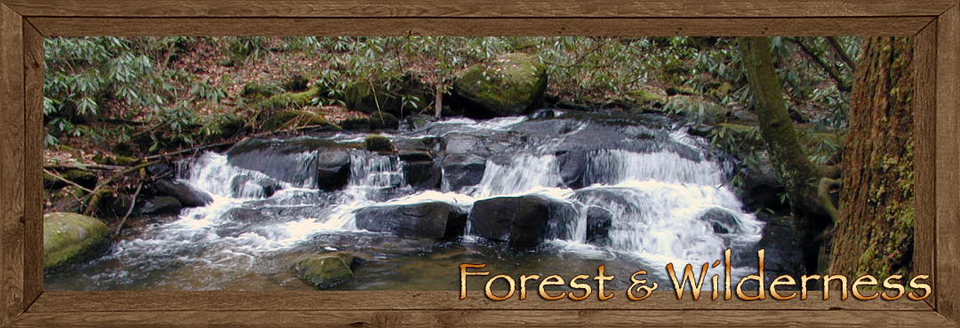 Forest & Wilderness surrounding Fannin County