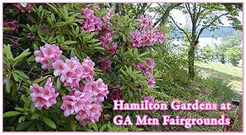 Hamilton Gardens at GA Mtn Fairgrounds