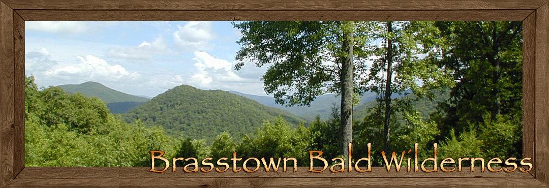 Brasstown Bald Wilderness